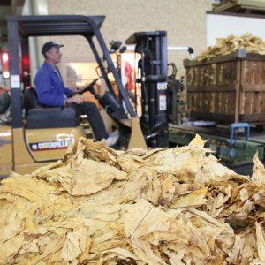 Conditionnement et export du tabac de Virginie - CT2F