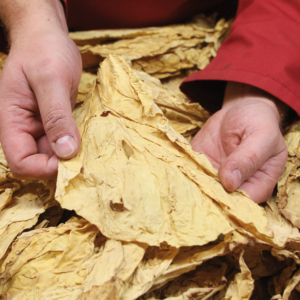 Tabac de Virginie